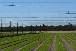 Different crops with different water requirements can be grown under this system.